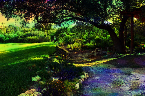 morning flowers sunlight photomanipulation landscape shadows digitalart blooms wetland hypothetical meadgardens arteffects greenscene sharingart awardtree vanagram altrafotografia
