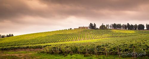 Toscana,Italia by David Butali