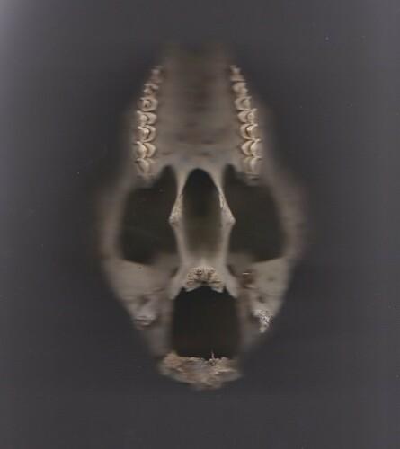 skull photocopied