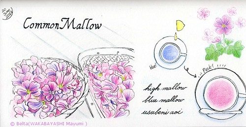 2013_06_20_common_mallow_01_s by blue_belta