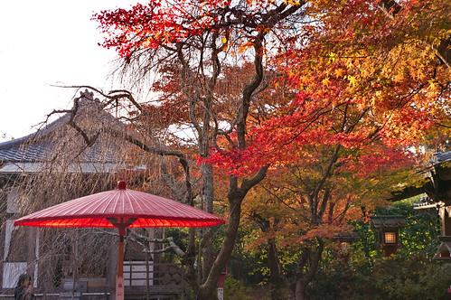 【写真】紅葉 : 常照寺