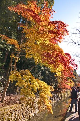 【写真】2012 紅葉 : 哲学の道/2020-10-03/IMGP7376