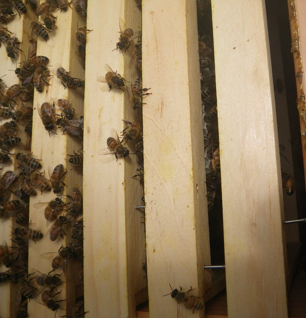 seven combs on in the moon hive too