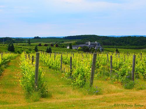 vineyard wine winery traversecity grapevines oldmissionpeninsula michiganwinery charlesbonham michiganwineregion chateaugrandtraversevinyard