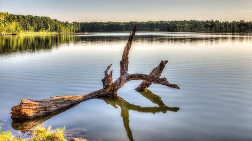 lake tree water landscape unitedstates northcarolina hdr highdynamicrange gastonia rankinlakepark gastoncountypark