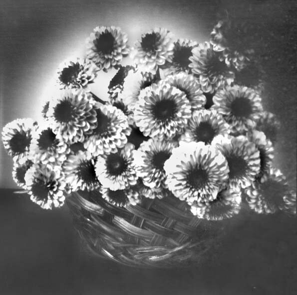 pinhole-camera-flowers