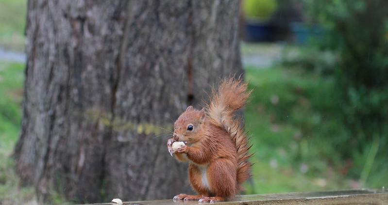 Hungry squirrel by mb2024