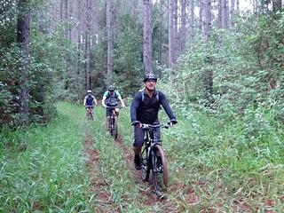 Crohamhurst State Forest
