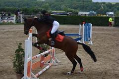 animal sports, equestrianism, english riding, modern pentathlon, eventing, show jumping, hunt seat, equestrian sport, sports, recreation, outdoor recreation, equitation, horse, person,