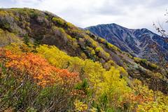 紅葉越しに小蓮華山