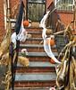 Neighbor on our street has tight Halloween game