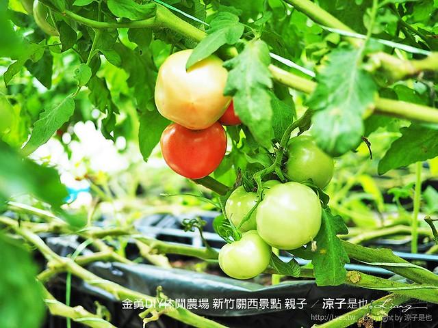 金勇DIY休閒農場 新竹關西景點 親子 68