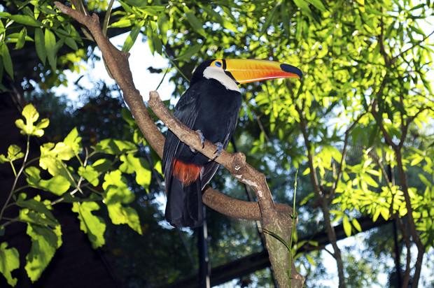 Parque das Aves 6