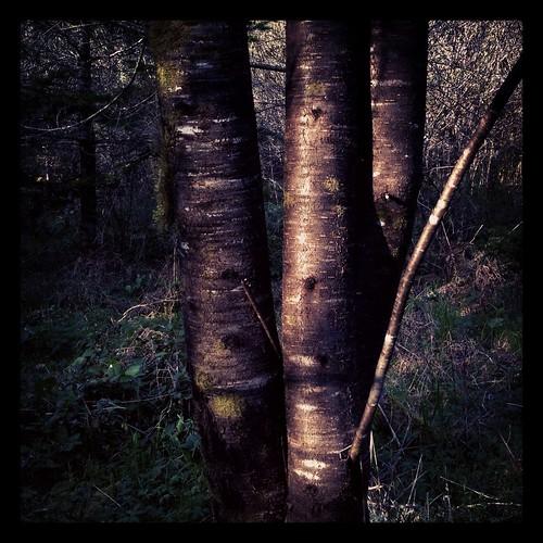 woodswalk by Nature Morte