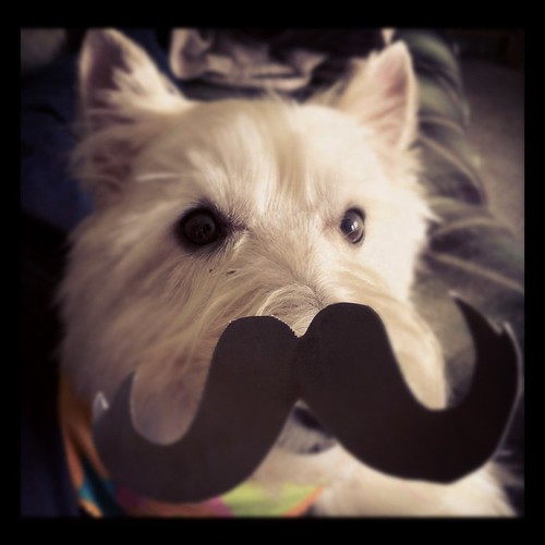 Duncan in a mustache