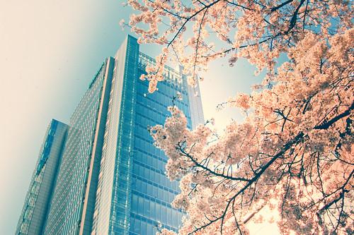 [フリー画像素材] 建築物・町並み, ビルディング, 桜・サクラ, 風景 - 日本 ID:201204181600