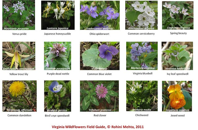 Wildflower Guide Part I Flickr Photo Sharing