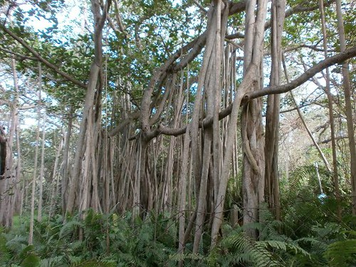 Adyar-Banyan-Tree-Chennai
