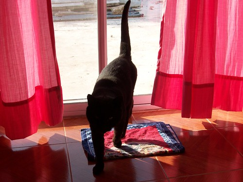 darjeeling, the lazy cat
