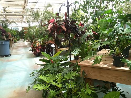 Merrifield Garden Center Via A Girl Named Sue Virginia Bloggers