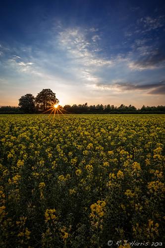 sunset landscape spring doncaster southyorkshire thorne rapeseedfield canon163528l rjharris