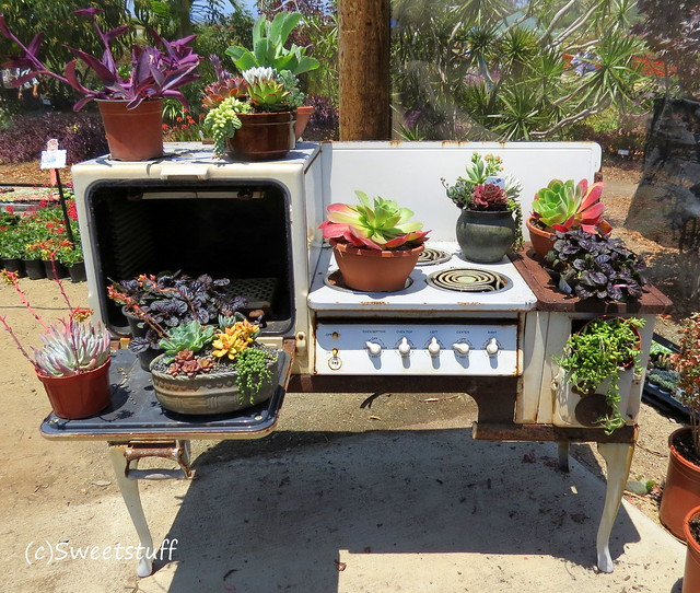 Succulent on old stove