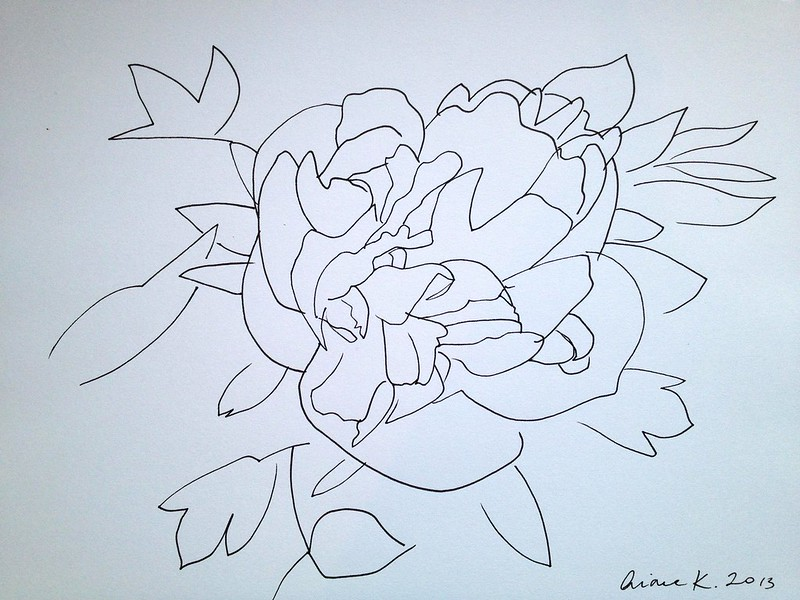 Peony line drawing