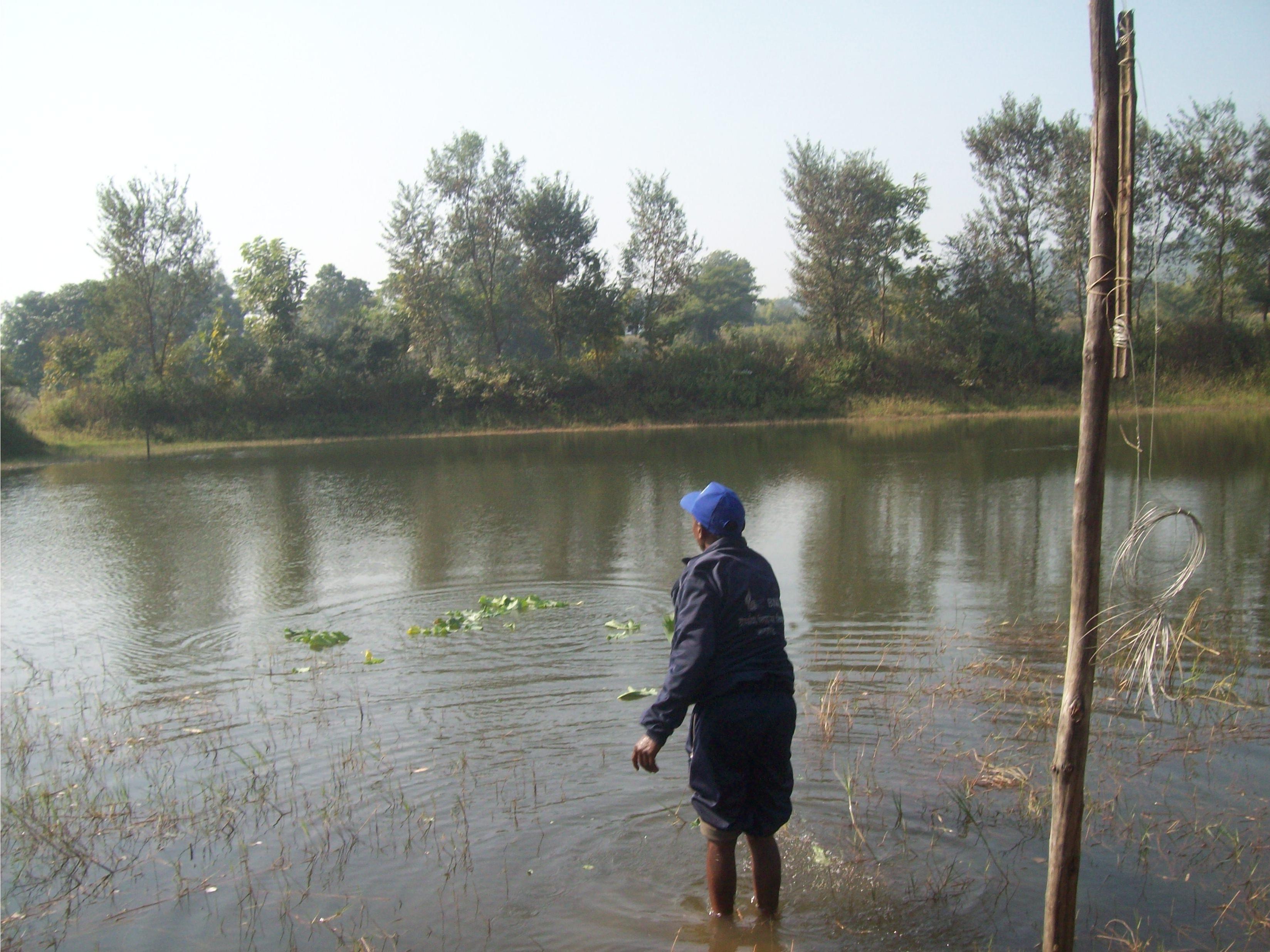 अपने तालाब से मछली पकड़ते विजय कुमार