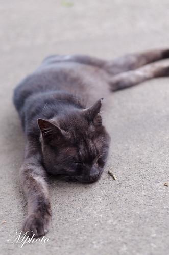 川越貓咪2