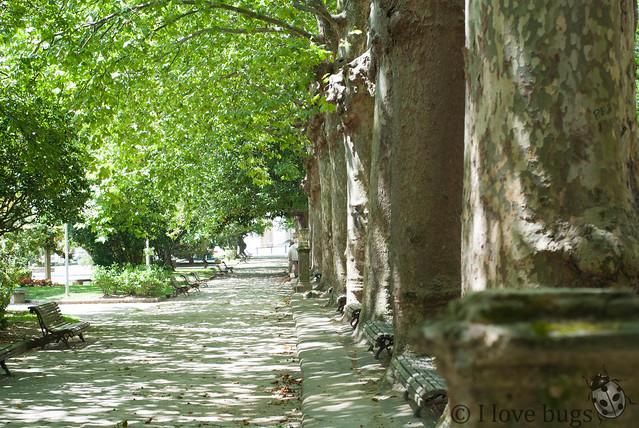 Tesoro LVM: jardín