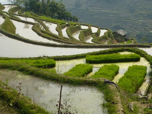 Yunnan13-Yuanyang 21 (9)