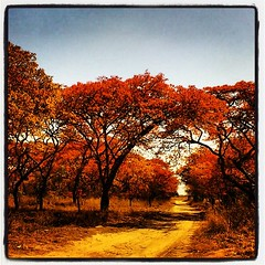 Nature colours..