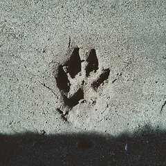 Sand imprint of our little creature
