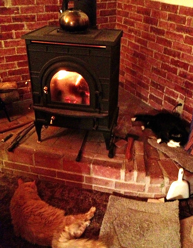 Cats enjoy the wood stove