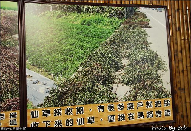 關西-仙草博物館24