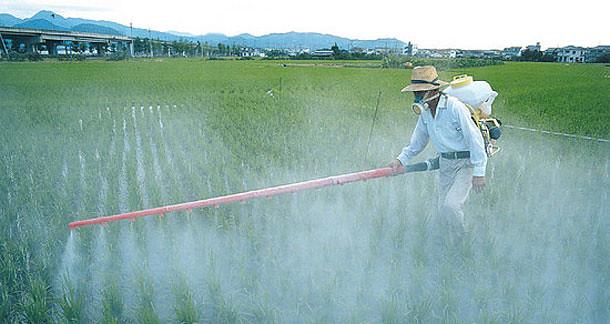 agrotoxicos_arroz.jpg