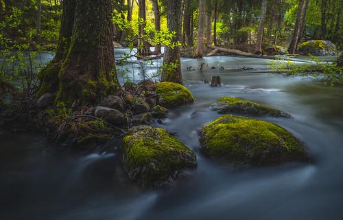 sunset forest flow nikon rocks nikkor mossy jyrki d600 1635mm salmi langinkoski