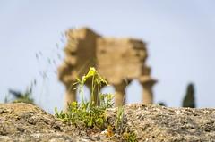 springtime in Agrigento...