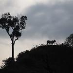 So, 03.05.15 - 07:35 - Ecohostal Medellin