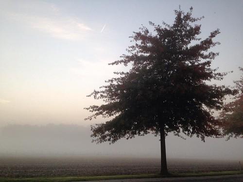 De mooiste boom van Lendelede 😍 vanaf volgende week (winteruur) terug het decor van prachtige zonsopgangen. Ik kijk er al naar uit! #lendelede #dingendiefijnzijn