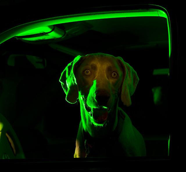 Repo Dog
