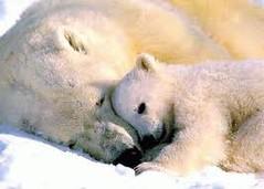 osos de verdad tiernos