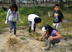 burying eggs