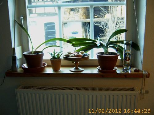 KüchenfensterRH