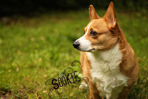 Sookie! by Make Way For Cupcakes