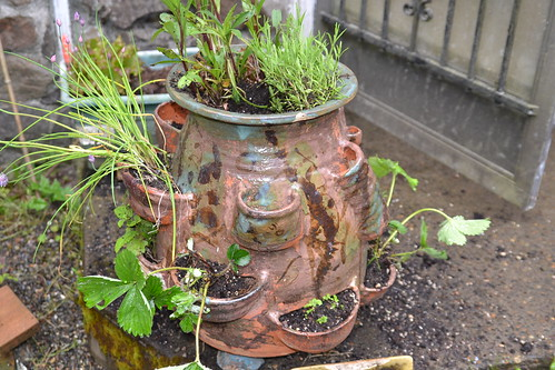 old pot new gaden