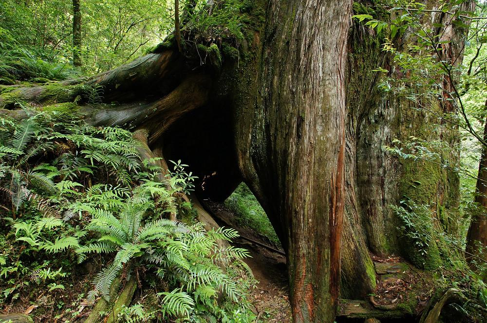 巨木群,與往拉拉山的路上-032