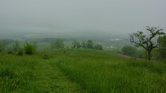 Foggy hike on Piedmont Overlook trail above Sky Meadows State Park 4