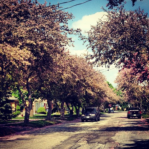 Pretty tree-lined street