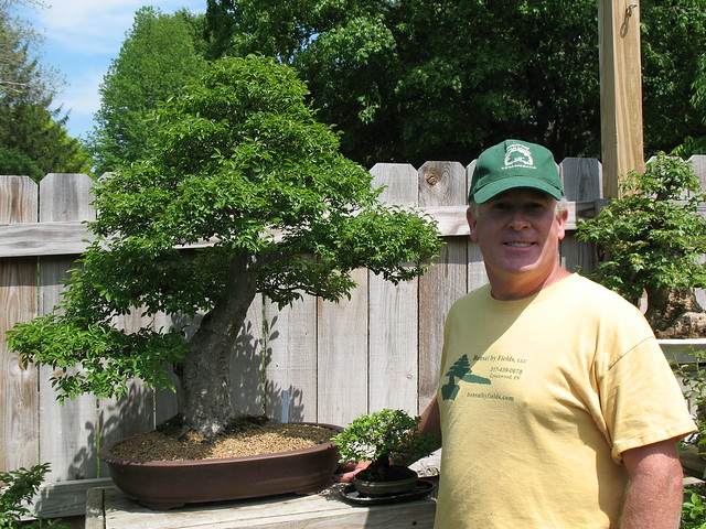 Mark's Chinese Elm